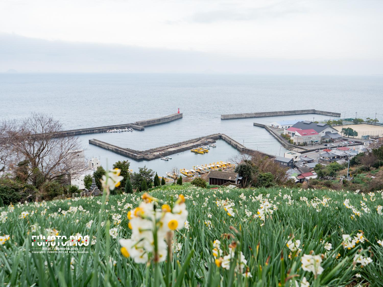 その花畑は下灘漁港を見下ろす丘の上にある